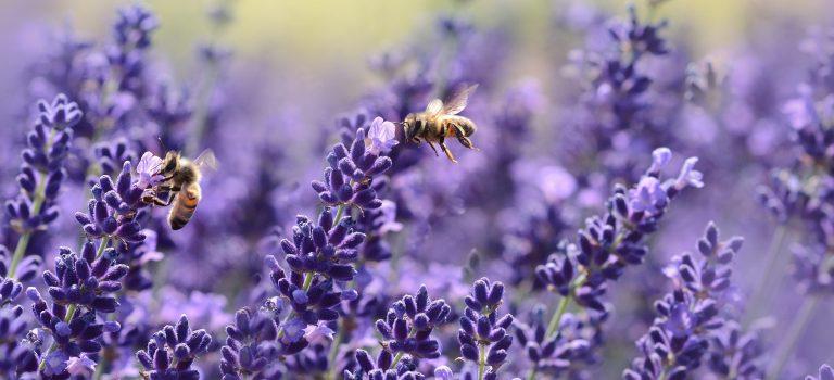 Planung Bienenwald Weißwasser
